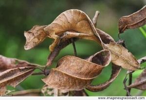 camaleon-con-el-color-de-la-hoja